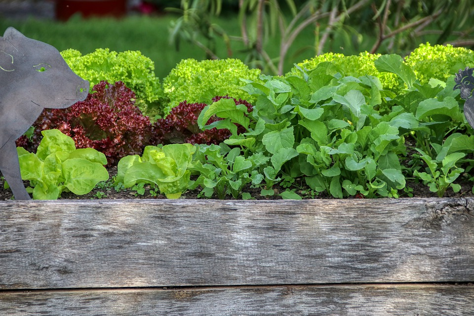 Get the most from your garden with a raised bed.