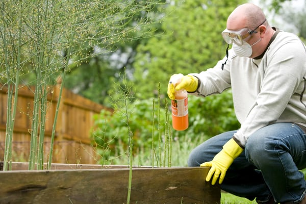 Using Lawn Fungicide