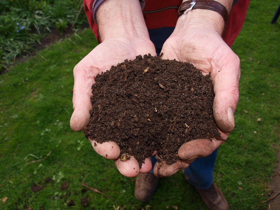 Using proper soil and aeration gives a plants a home they love.