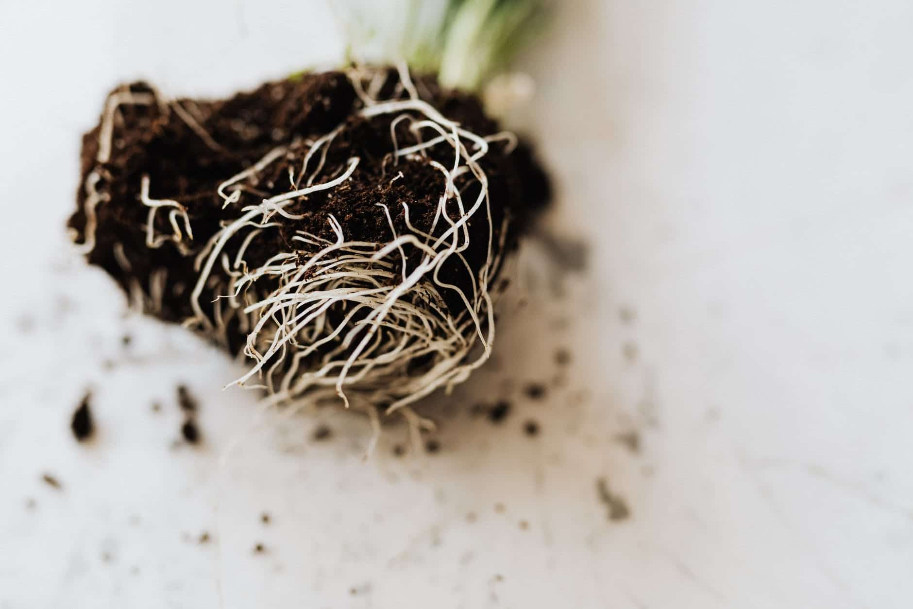 Carefully check roots to avoid further damage.