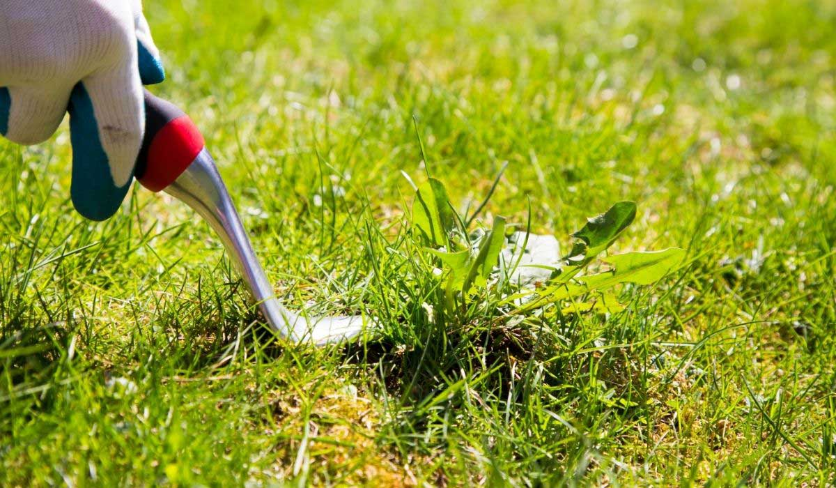 Best Weed Removal Tools to Buy Now