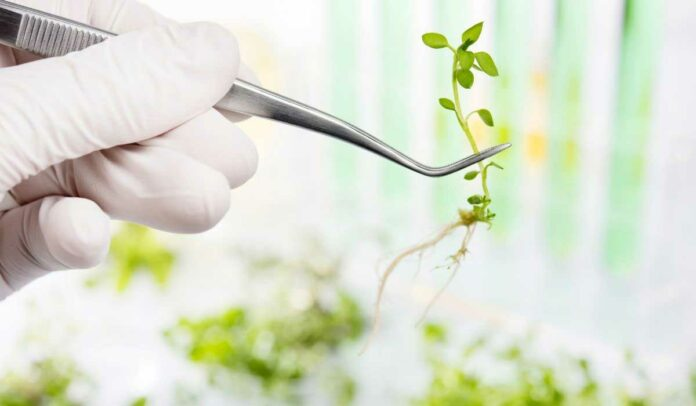 Cloning Machines for Plants