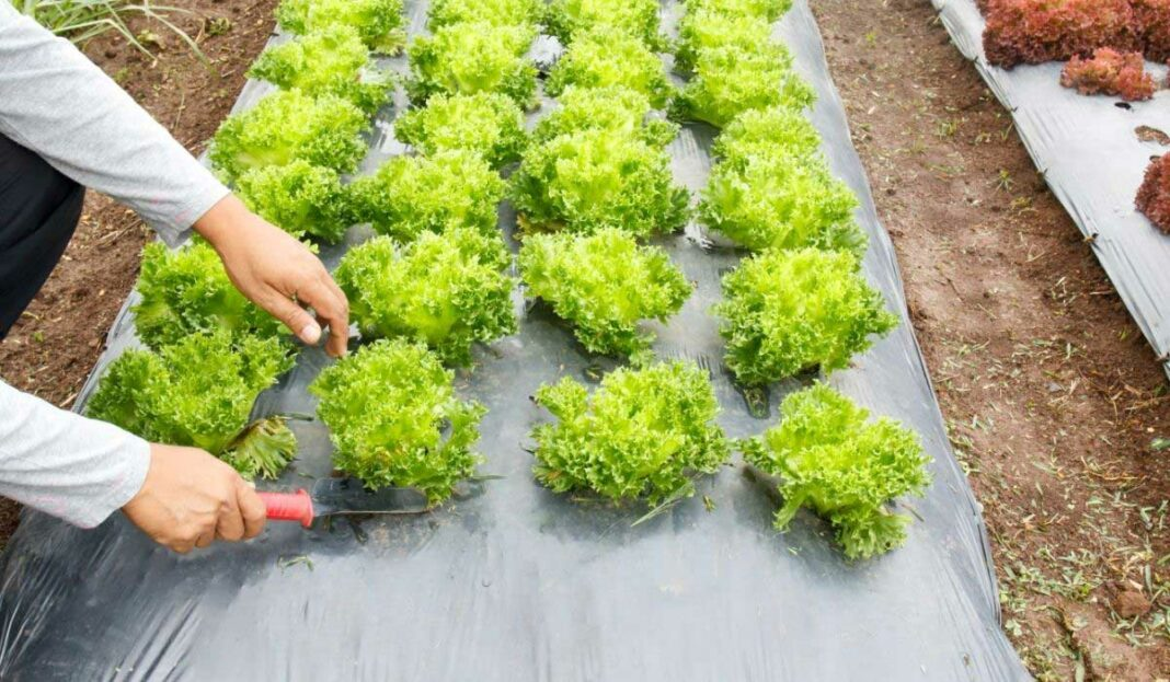 Weed Barrier and Landscape Fabric