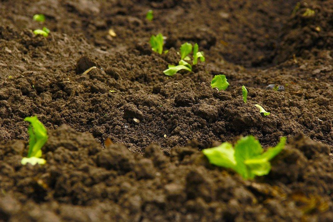 Restoring Soil in Your Garden