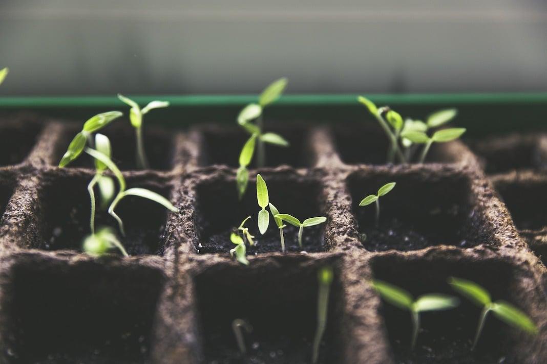 Tips for Breeding Plants