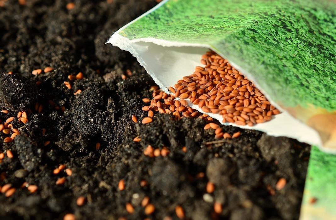 Tips for Saving Plant Seeds